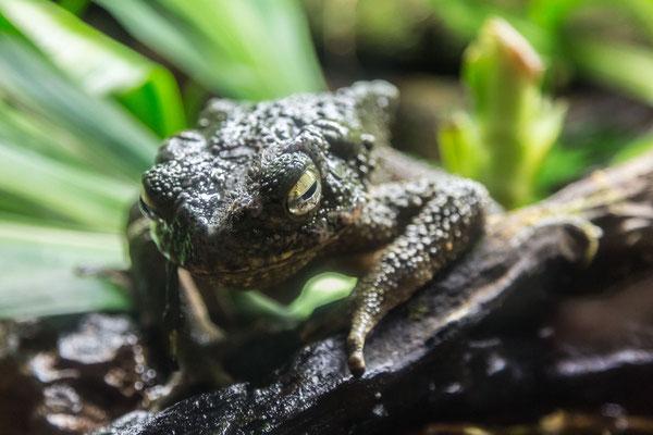 Strange frog photo