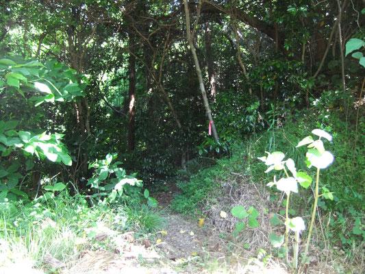 森の出入り口。