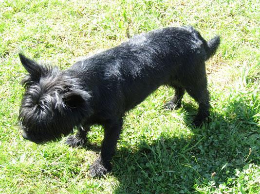 Millie (Mai 2017)