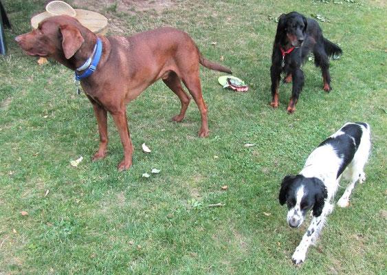 Hamish, Logie and Neno