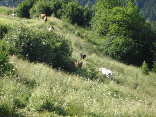Gruppe im hohen Gras