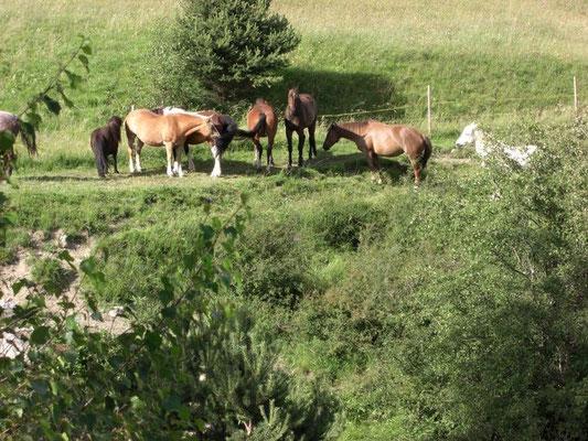 Pferde beim Bach 2009