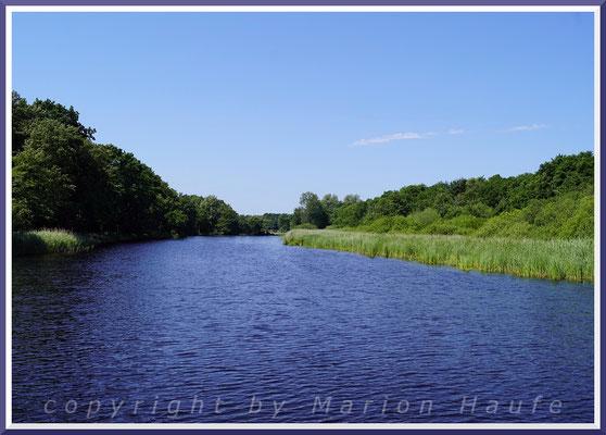 Gewässerufer, zum Beispiel am Alten Strom in Prerow, sind Lebensraum für viele Pflanzen, Juni 2020, Prerow/Mecklenburg-Vorpommern.