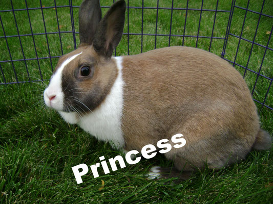 Although Princess is no longer at my with us, I thought she deserved some recognition on this page since she played such a large part in my rabbitry. Princess was my very first brood doe. She is incredibly smart and she lovingly cared for 3 litters while
