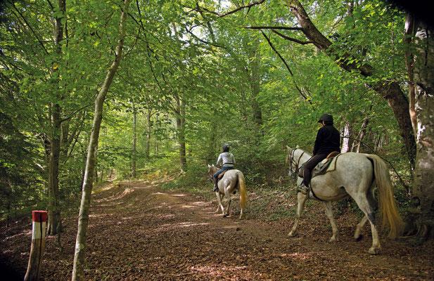 equitación / paseo ecuestre en vic-bilh/vinedo Madiran