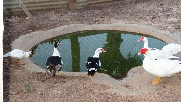 Die Missionsstation von Pfarrer Renner - die Enten haben sogar einen kleinen Teich