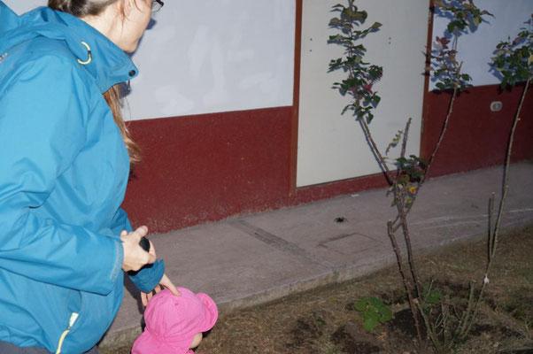 Eine Tarantel begegnet uns auf dem Heimweg.