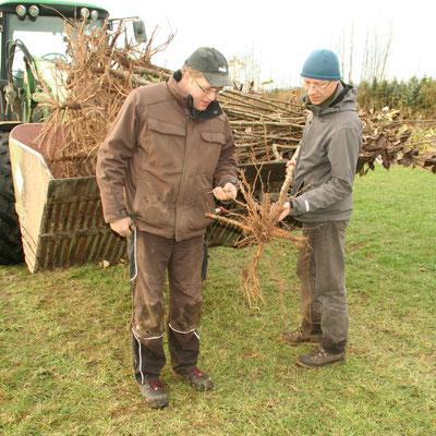 Jochen Hartmann und Agroforst-Experte Burkhard Kayser begutachten die Pappeln.