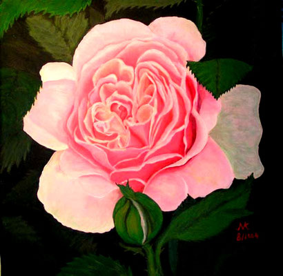 Old English Rose, 40x40, Acrl auf Leinwand