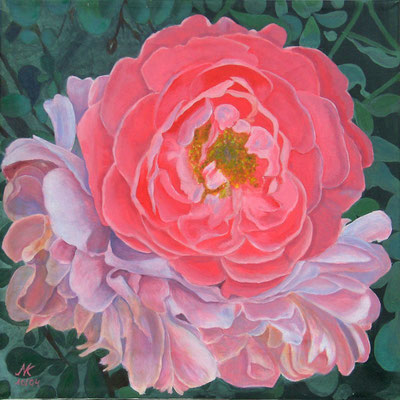 English Spring Rose, 40x40, Acrl auf Leinwand
