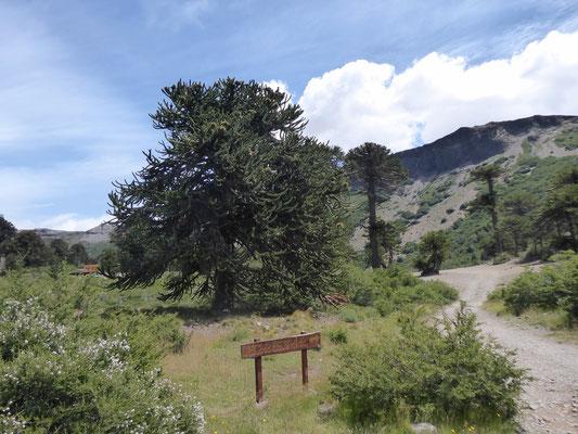 Am Eingang zum Wanderpfad zur Cascada Escondida