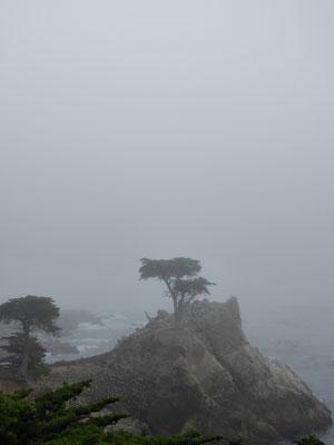 ... der sich ebenfalls in Nebel hüllt