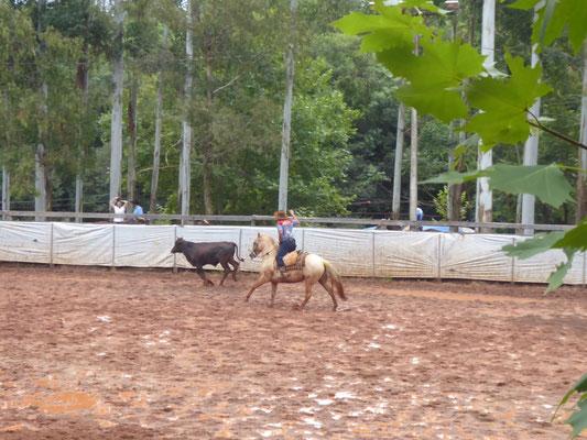 Unterwegs zufällig entdeckt: Rodeo-Wochenende. Catch the cow!