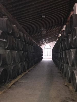Sherry-Veredelung: es werden immer wieder kleinere Sherrymengen aus den oberen Fassreihen in die darunter liegenden umgepumpt