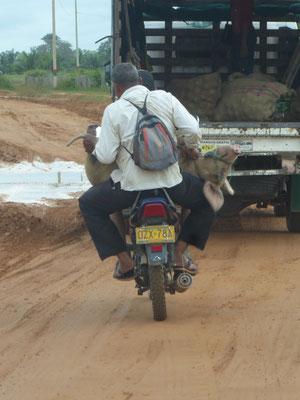 Hier fährt die Sau Moped