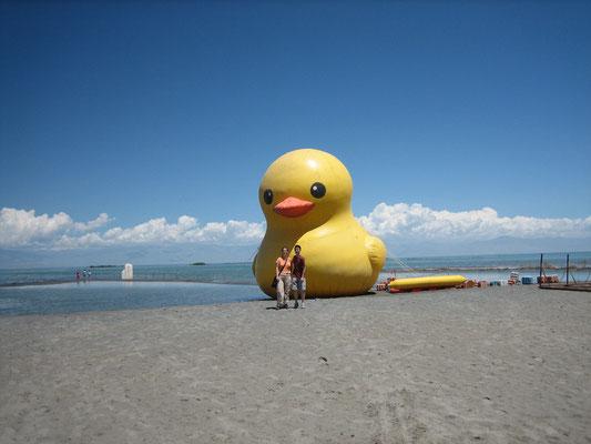 Ente Nummer 1 in Xinjiang-Hawaii (Badeente)