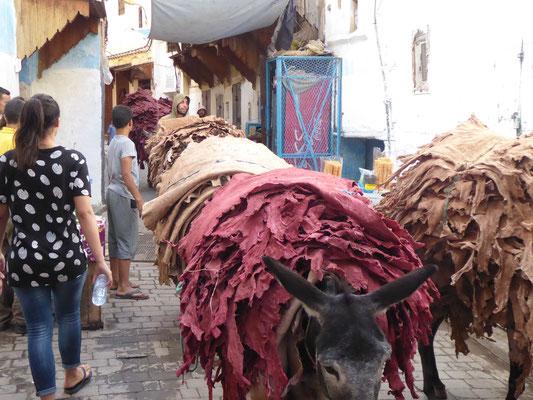 Arme Esel beim Transport von Häuten