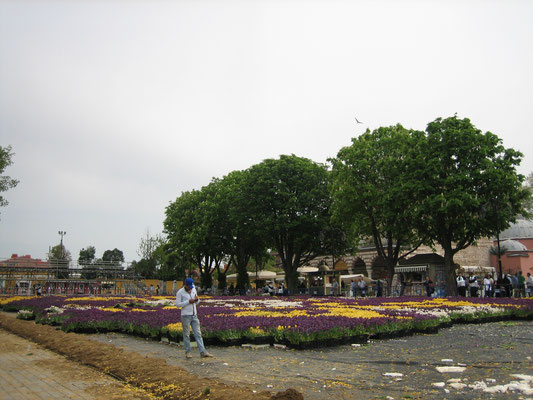 Das Tulpenfest neigt sich dem Ende zu (am nächsten Tag waren die alle verschwunden)