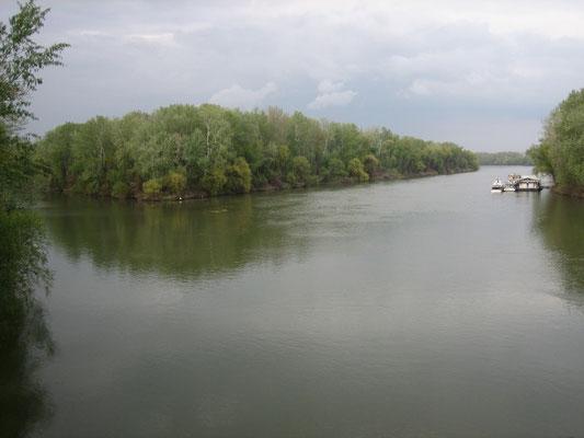 Zusammenfluss von Theiß (Tisza) und Bodrog
