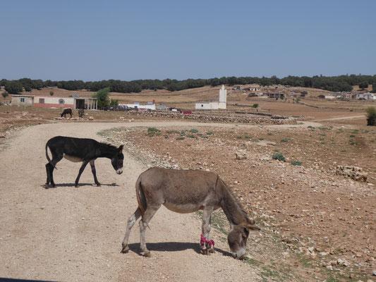 Hauptfortbewegungs- und Transportmittel Marokkos (1 ES = Eselsstärke)