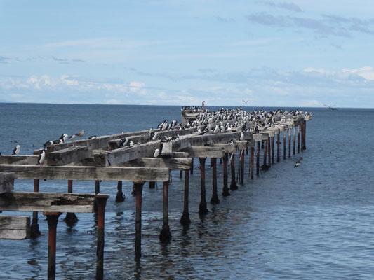 ... am Hafen von Punta Arenas