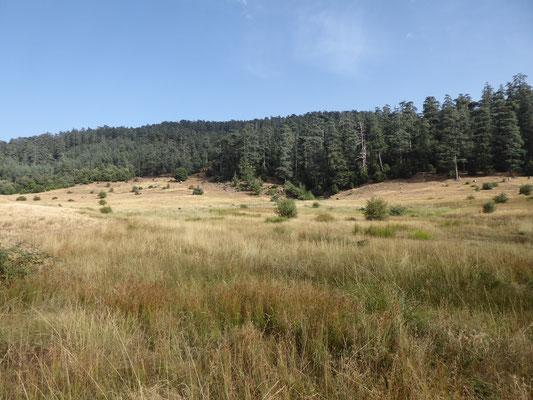 Grüne Wälder, schöne Steppe