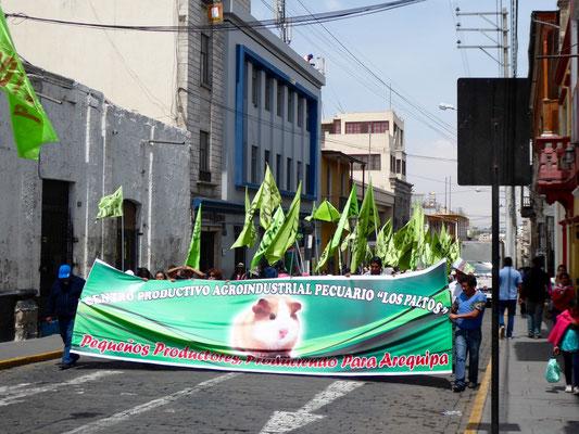 Hier demonstrieren die Klein-Meerschweinchen-Erzeuger gegen die industriellen Meerschweinchen-Produzenten. (Wiesenhof in Peru???)