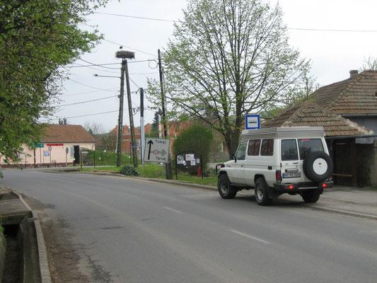 Störche kurz vor Tokaj