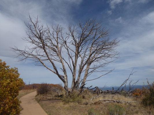 Baum (nackig)