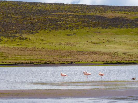 Hier gibt' auch Flamingos...