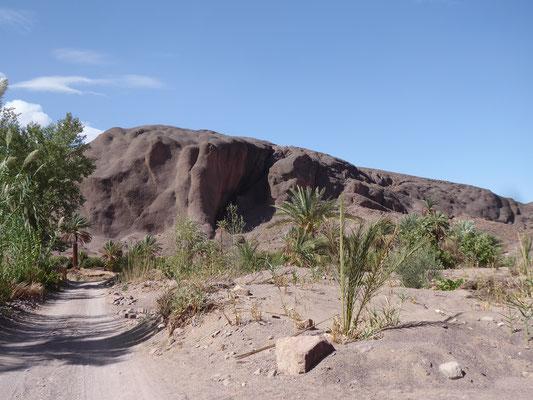 Palmenpfad