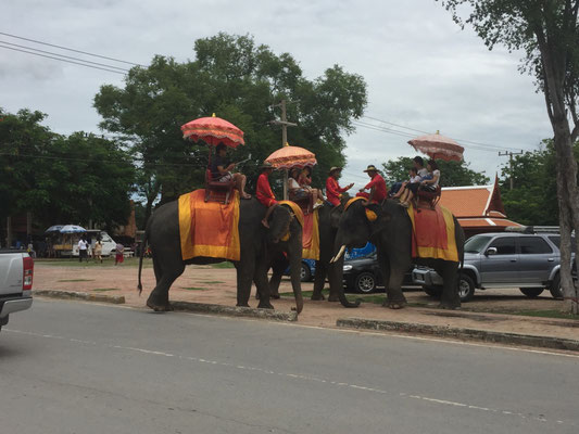 Elefantenstau auf der Hauptverkehrsstraße