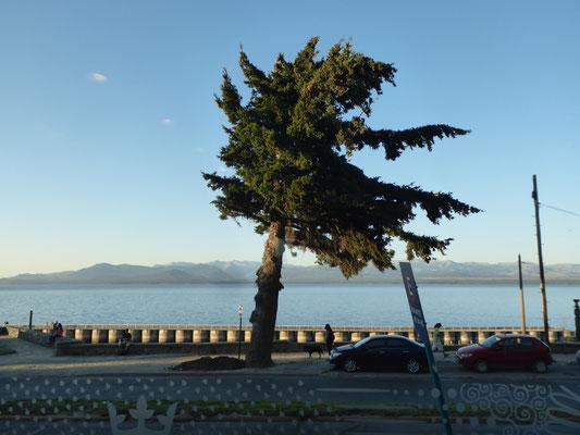 Das schönste von Bariloche: Die Aussicht aus unserem Hotelzimmer auf den See. Der Baum zeigt die maßgebliche Windrichtung an: Westen!