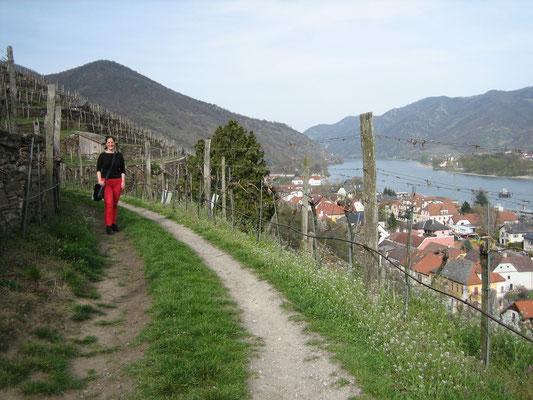 Spaziergang in den Weinbergen der Domäne Wachau über Spitz