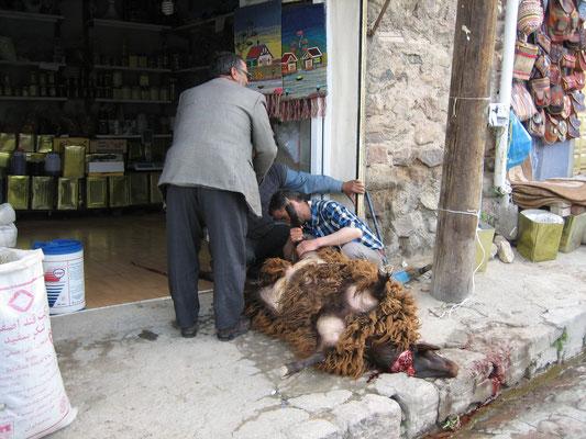 Das Schaf war glücklicherweise schon tot, bevor die Herren begannen, es aufzublasen.