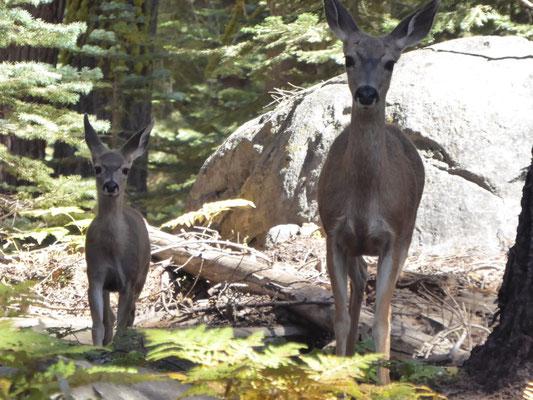 Begegnung im Wald (mit neuer Kamera)