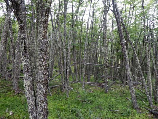 Wald im Nationalpark Los Glaciares