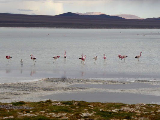"""Da wir noch keine Pinguine getroffen haben, nennen wir sie """"Flaminguine"""""""