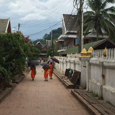 Mönchli auf der Dorfstraße