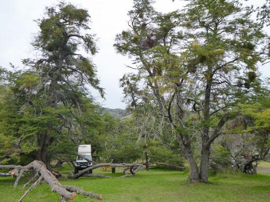Traumhafter Stellplatz im Nationalpark (Camping Lago Roca)