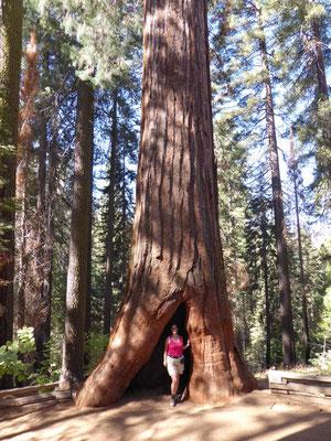 Frau und Baum
