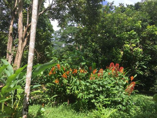 Tropische Pracht vor unserer Hütte im Paradise Resort