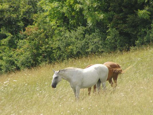 Am Sonnenstein zur Pferdewallfahrt