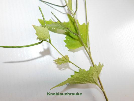 Knoblauchrauke (nur Blätter verwenden, alles andere ist zu hart)