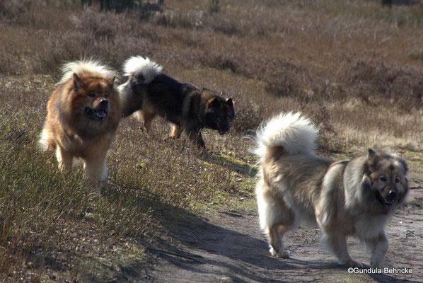 V.li.: Buddy, Bonny und Aylana