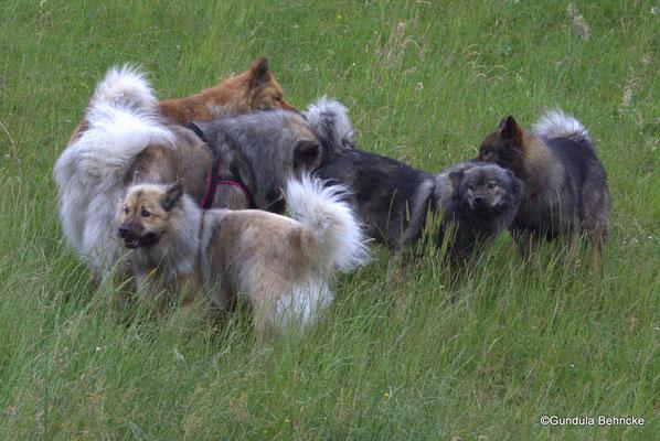 Von li.: Billie, Deejay, Aylana(vorne), Blikki und Bonny