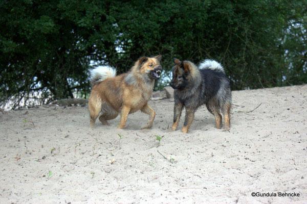 Billie(li.) und Bonny: eine spezielle Geschwisterliebe
