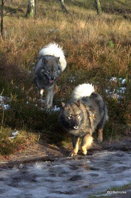 Eskia(hinten) und Cousine Bonny(vorne)