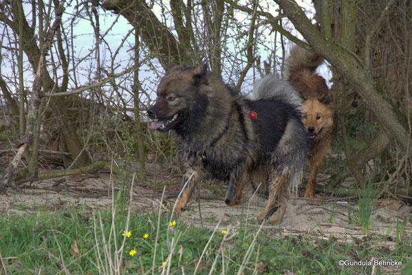 Bonny(vorne) und Billie-Bijou(hinten)
