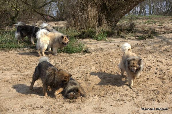 Hinten: Arni vom Tayemoor, vorne v. li.: Bonny, Sanny, Aylana